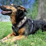 4802-kleiner-mischlingshund