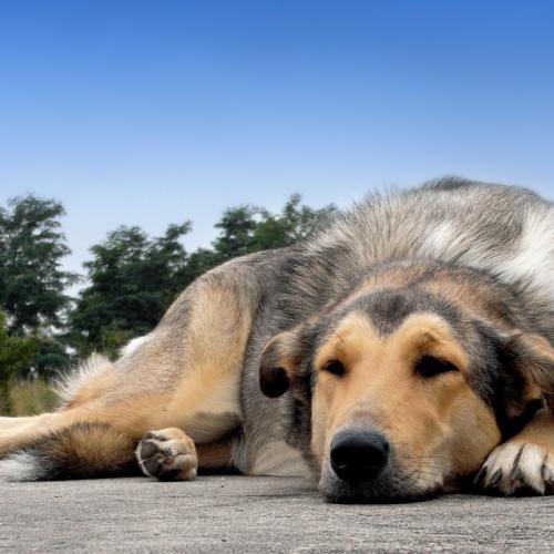4294-mischlingshund-chillt